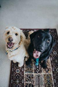 Rangebourne Pet Care