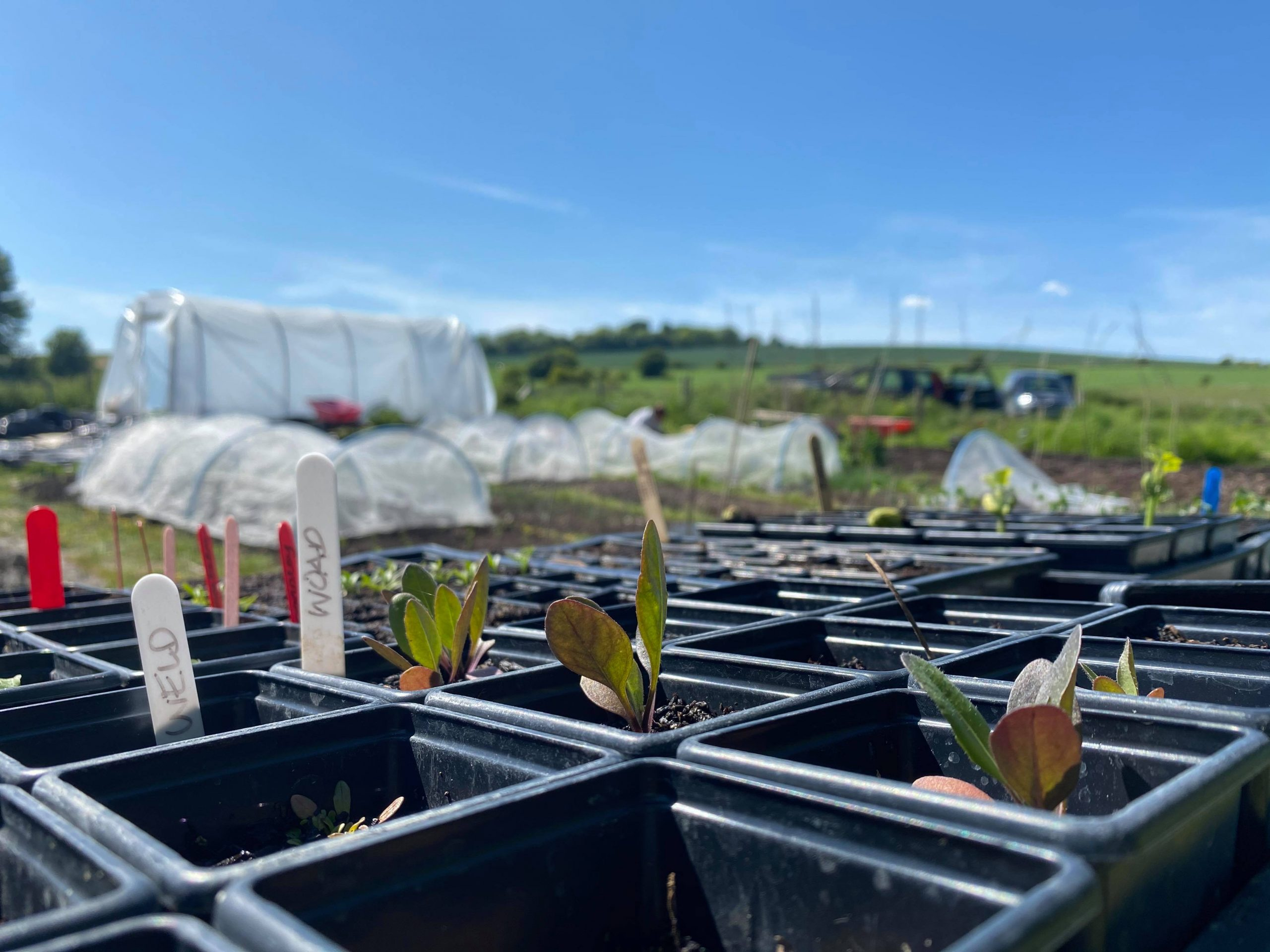 Chestnuts Farm seedlings